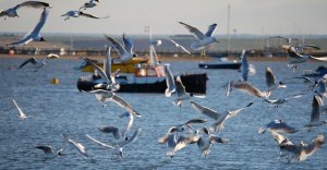 Birds in the Thames Estuary