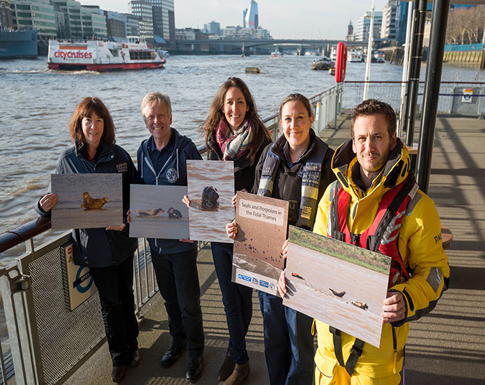 New advice on marine mammals in the Thames